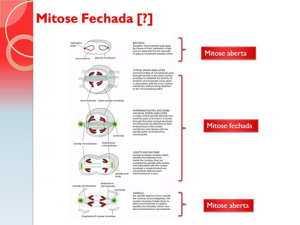 Mitose Fechada [ ] Mitose aberta Mitose fechada Mitose aberta